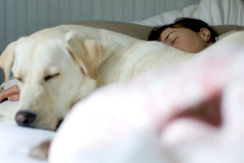 An image showing a person and a dog asleep