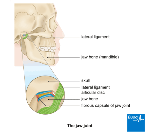 Jaw joint dysfunction symptoms healthcare bupa uk an image showing the jaw joint ccuart Gallery
