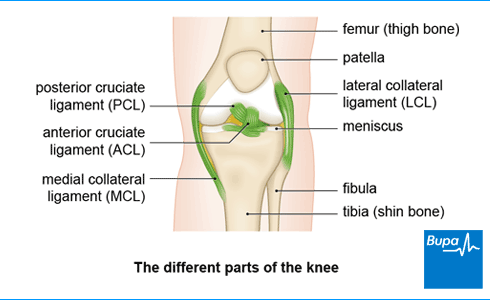 Anterior cruciate ligament (ACL) injury | Health Information
